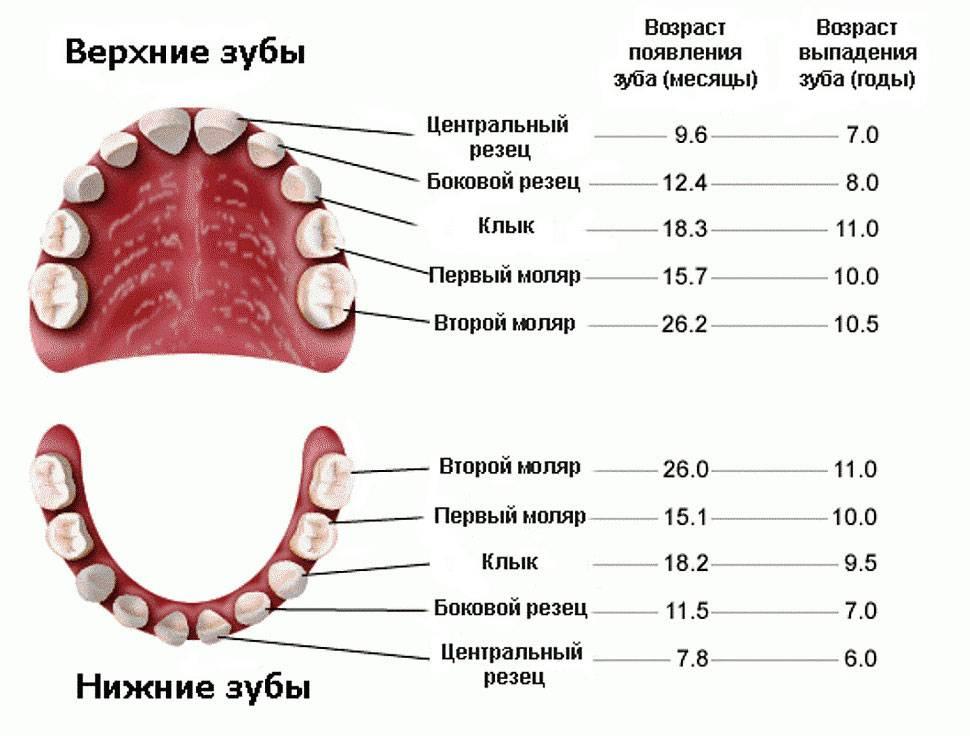 Выпалпервыймолочныйзуб, консультация стоматолога