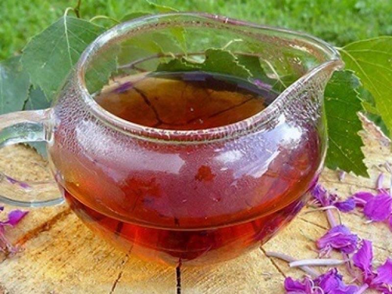 Крапивный чай: польза и вред для здоровья