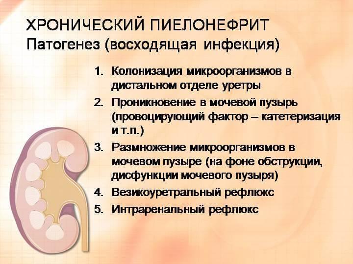 Гломерулонефрит и беременность. симптомы. диагностика. лечени гломерулонефрита.