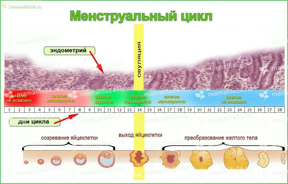 Овариальный резерв яичников — запас яйцеклеток ограничен * клиника диана