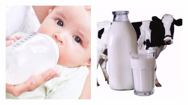 Козье молоко при грудном вскармливании: можно ли пить, польза и вред, ограничения к употреблению