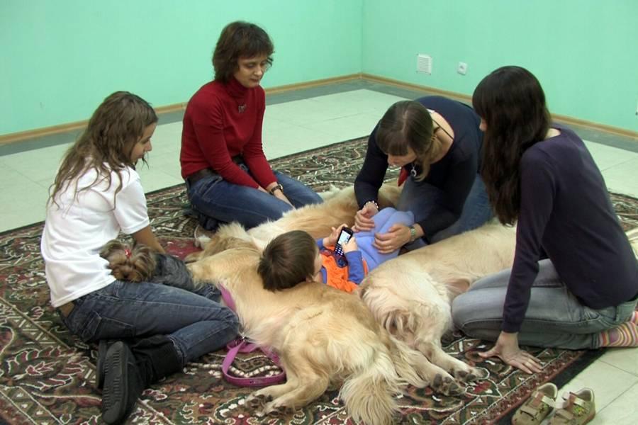 Канистерапия, или как собаки лечат душу