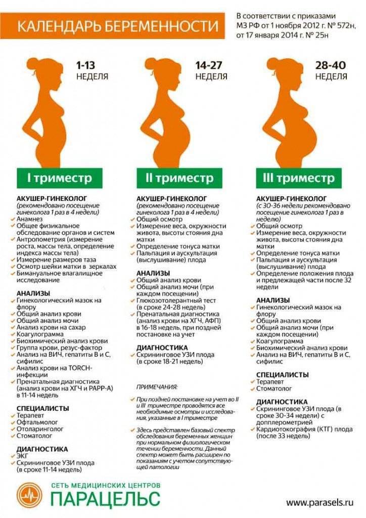 Триместры беременности по неделям - таблица: с какой недели начинается второй и третий триместры - детская клиническая больница г. улан-удэ