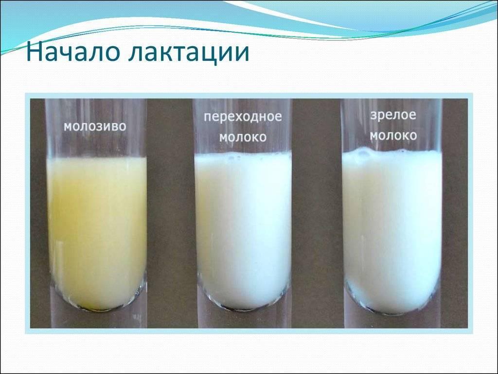 Как правильно прекратить лактацию грудного молока