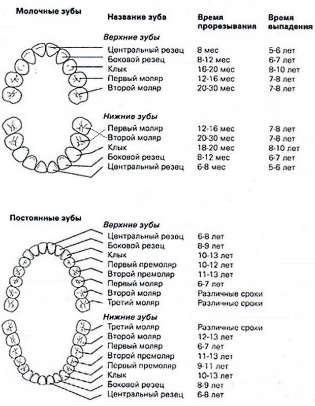 Реставрация молочных зубов: современные методы и возможности