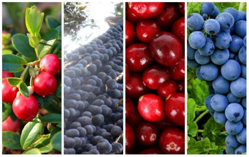 Черника: лечебные свойства и применение | food and health