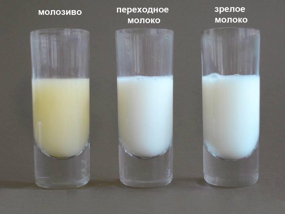 Способы оценки жирности грудного молока в домашних условиях