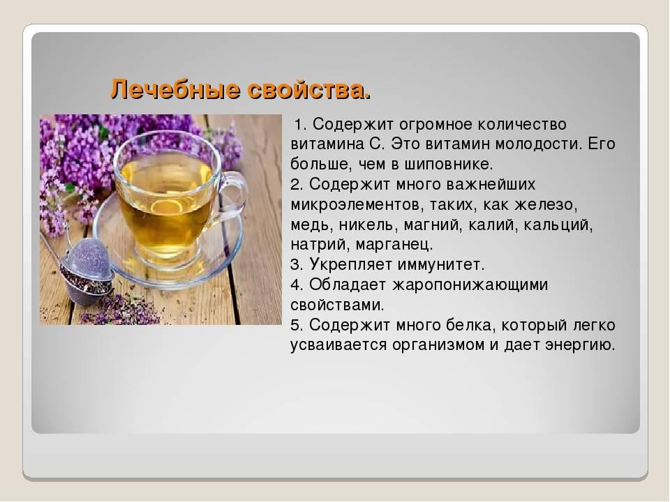 Иван чай кормящим мамам, польза для лактации, противопоказания