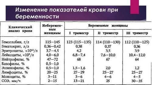 Гемоглобин, какая норма у беременных женщин? какой должен быть на 1, 2 или 3 триместре