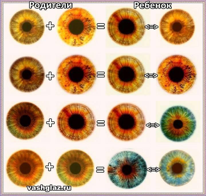 Цвет глаз у новорожденных: когда меняется окончательно на постоянный, в каком возрасте