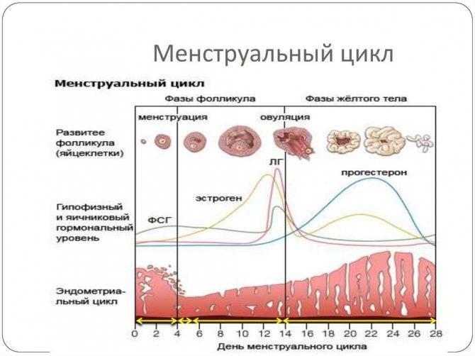 Боли в животе после пункции фолликулов: причины