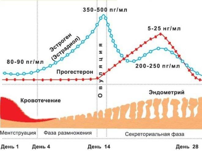 Овуляторная фаза цикла: норма гормонов прогестерон, эстрадиол, фсг