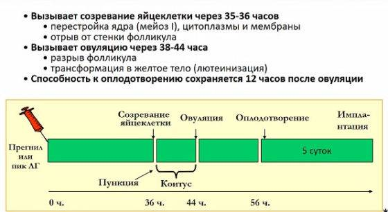 Стимуляция овуляции клостилбегитом
