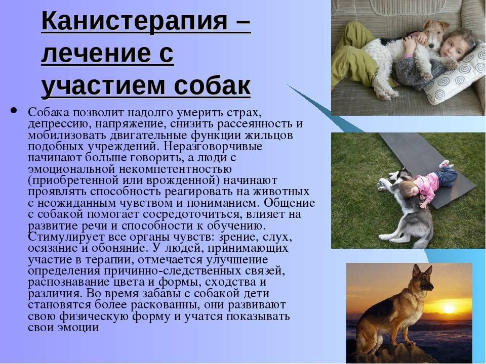 Дети идомашние животные: заипротив