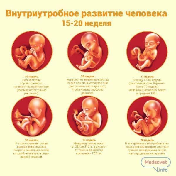 3 триместр беременности