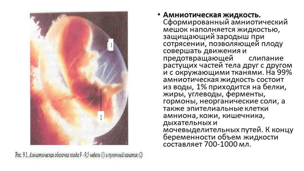 Околоплодные воды амниотическая жидкость: фото, как выглядят подтекают, цвет - детская клиническая больница г. улан-удэ