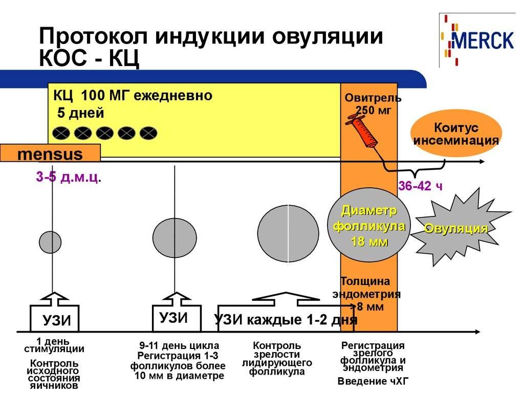 Стимуляция овуляции - клостилбегит | лечение бесплодия  екатеринбург