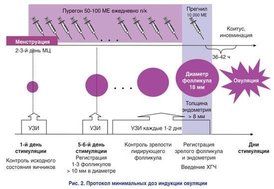 Стимуляция овуляции уколом хгч | клиника «центр эко-партус»