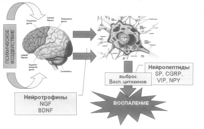 Лечение психосоматических заболеваний: что такое психосоматика, какие расстройства относятся к психосоматическим, почему возникают и как помочь себе в их лечении.