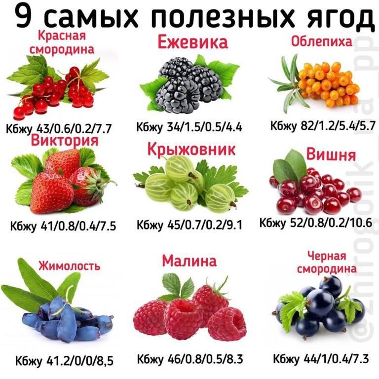 Ягоды в детском меню. какие ягоды можно давать ребенку?