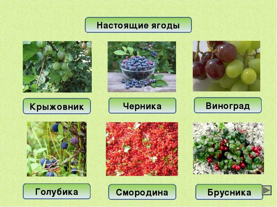 Какие ягоды можно при грудном вскармливании: черника, брусника, виноград