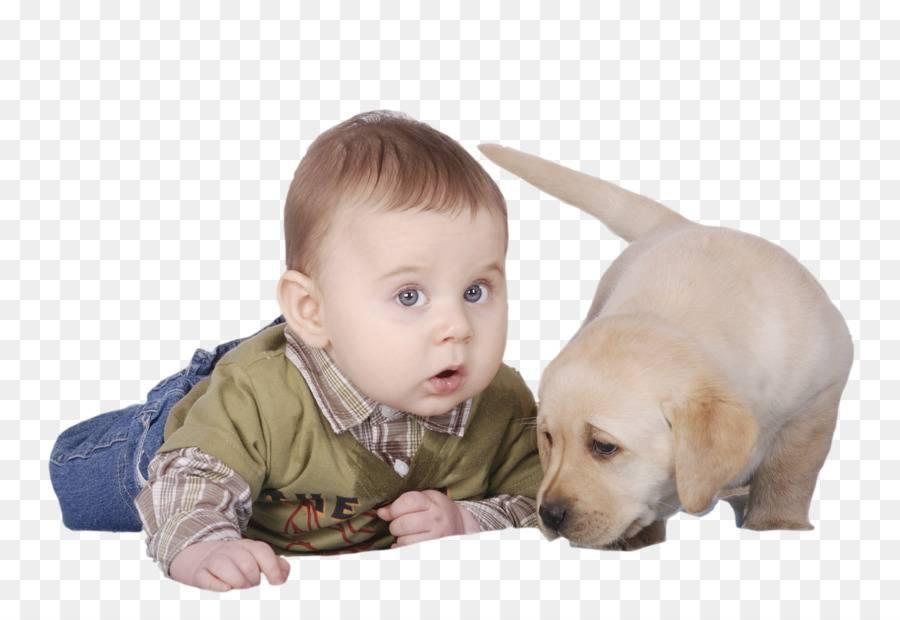 Позитивное влияние домашнего питомца на развитие ребенка