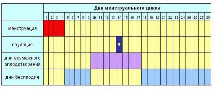 Рассчитать день овуляции - календарь овуляции онлайн - ovulyacia.ru