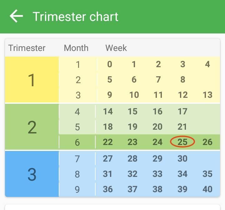 Триместры беременности по неделям: особенности