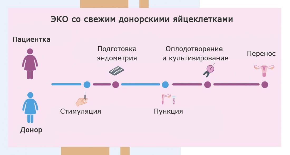 Короткий протокол эко по дням