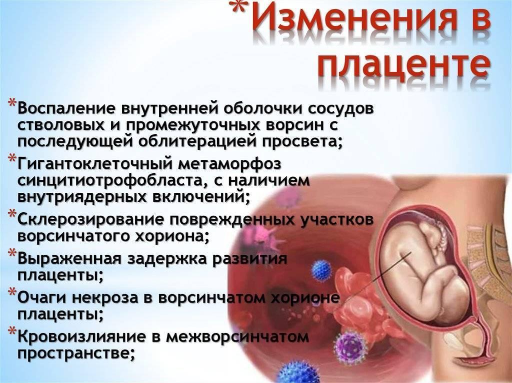 Сколько узи во время беременности необходимо?