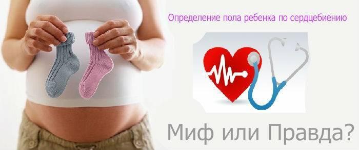 Можно ли узнать пол ребенка по сердцебиению — сердце