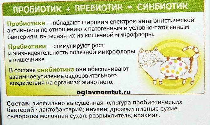 Топ-10 продуктов, содержащих пробиотики
