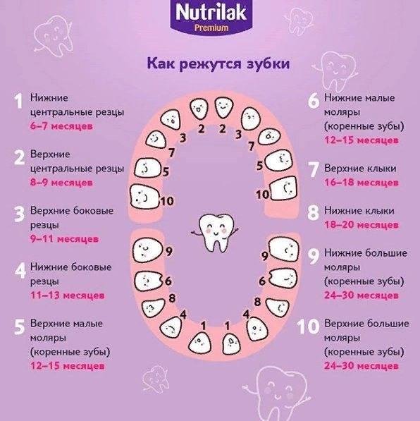 Прорезывание зубов: сроки и симптомы  