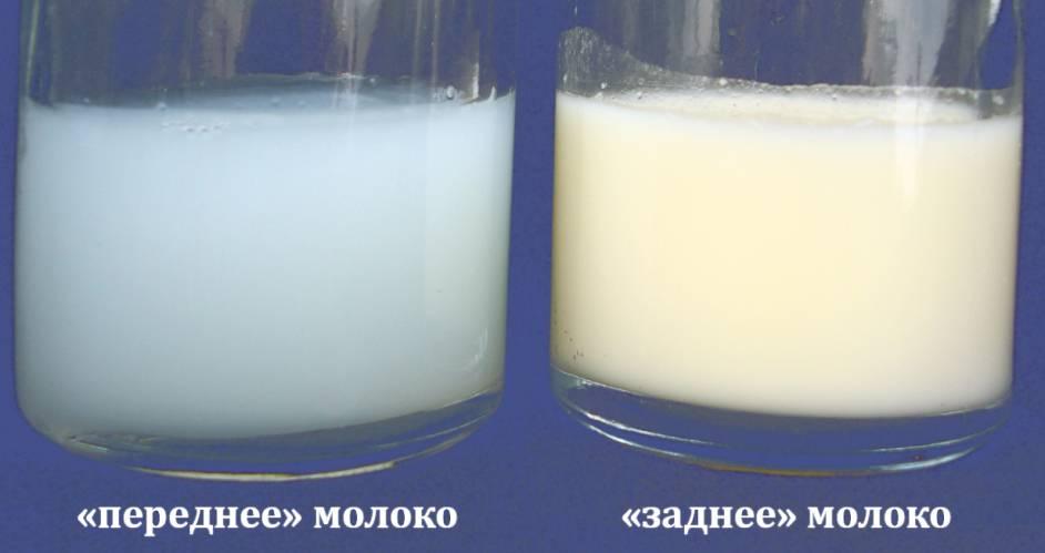 Жирность грудного молока: как определить этот показатель?