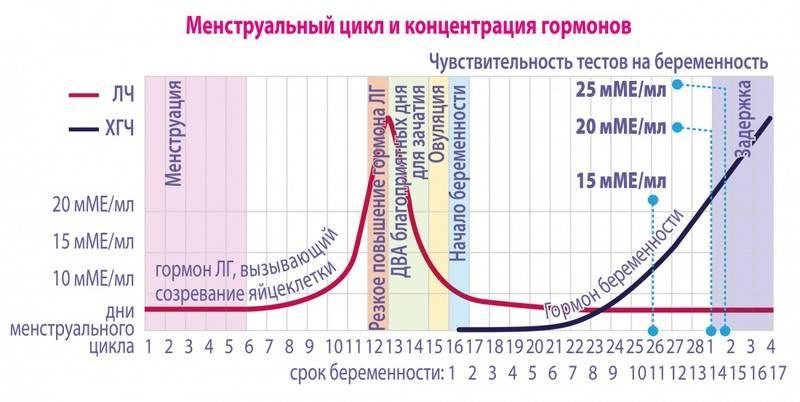 Что такое фертильные дни у женщин. как определить период и окно фертильности в женском календаре