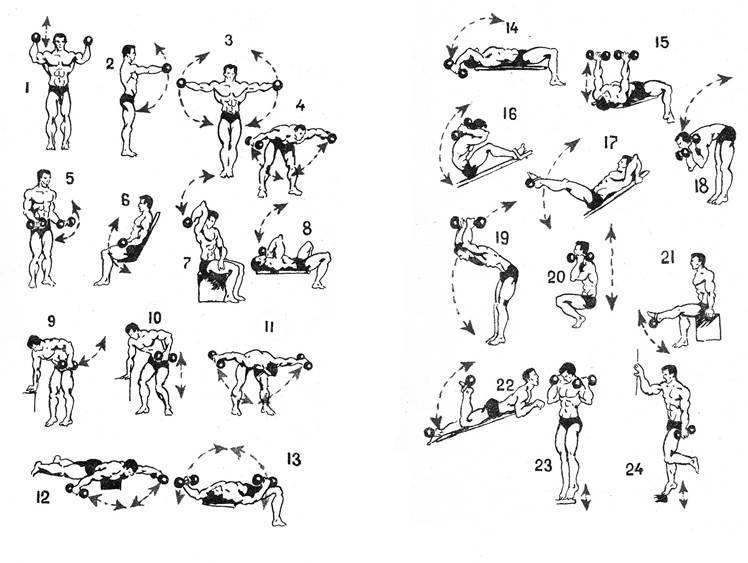 Упражнения с гантелями для детей (5–11 лет): комплекс занятий и нагрузок, картинки, видео