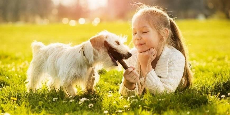 Роль животных в жизни людей. влияние домашних животных на формирование характера ребенка