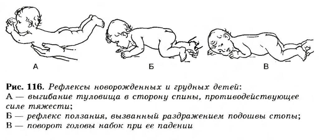 Рефлексы новорожденного: моро, реакции бабинского, бабкина, галанта, таблица по месяцам