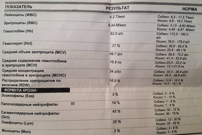 Причины наличия лейкоцитов в спермограмме и показатели нормы