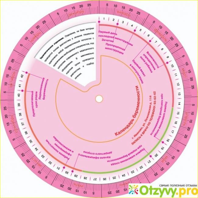 Первая неделя беременности. определение акушерского и эмбрионального срока и пдр