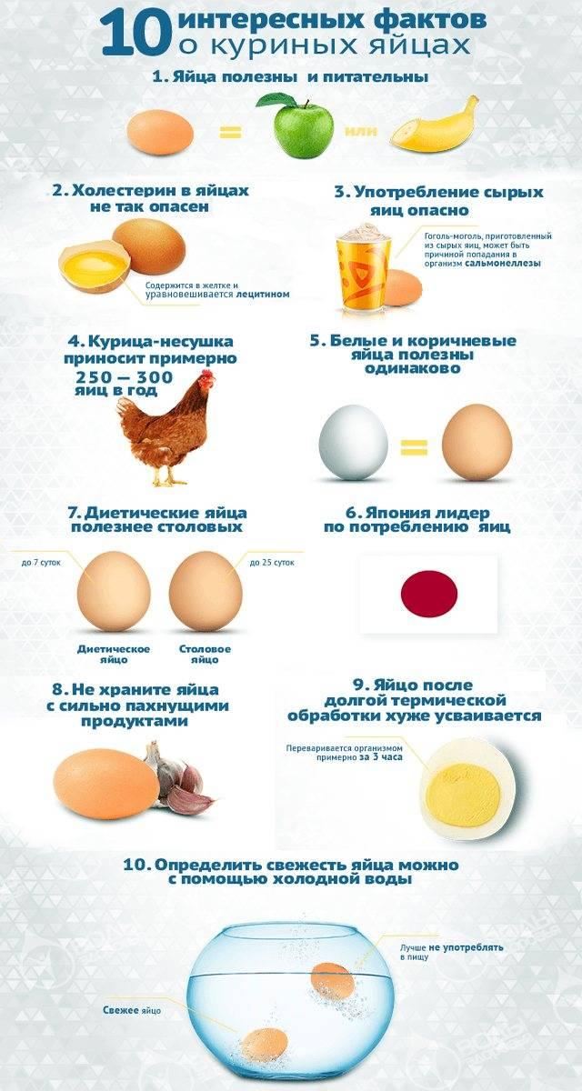 C какого возраста можно давать белок яйца и со скольки месяцев вводить яичный белок в прикорм