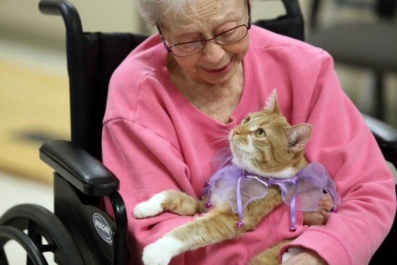 Пет-терапия: как животные лечат нас