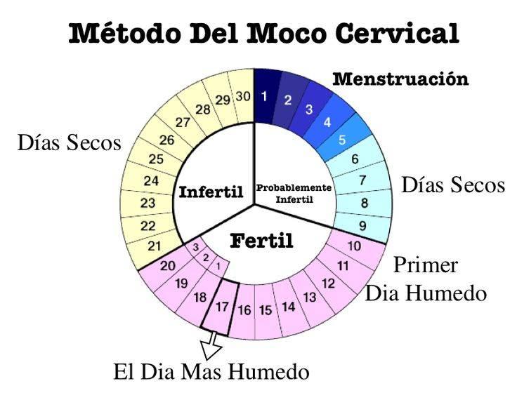 Что такое овуляция: бесплодие и нежелательная беременность