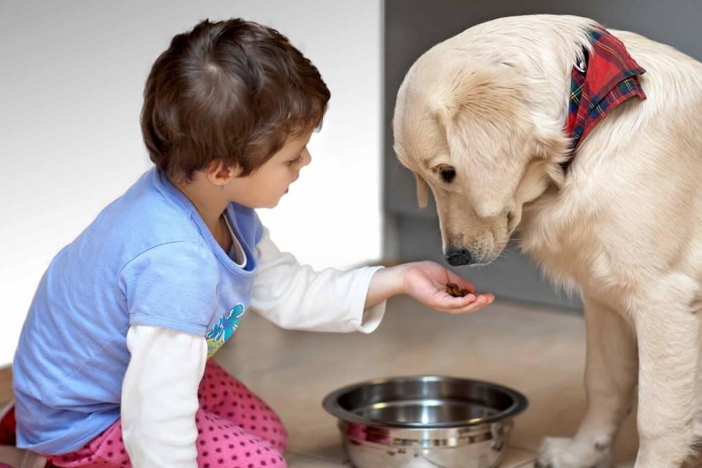Выясняем, какое домашнее животное лучше всего подарить ребенку