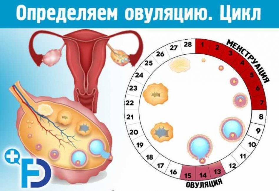 Как долго можно подождать: оцениваем женскую фертильность