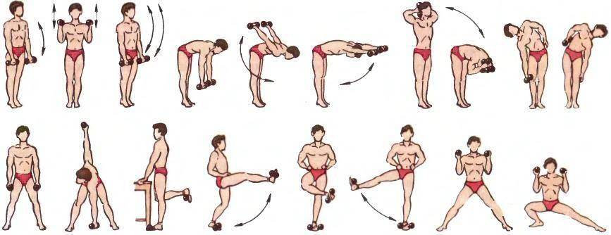 Упражнения с гантелями в домашних условиях для детей 10 лет