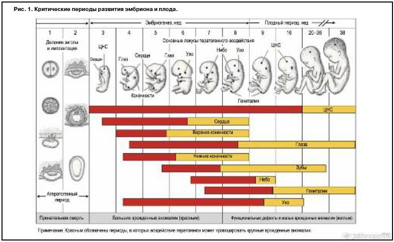 Какие недели в первом триместре самые опасные. самые опасные периоды беременности. консультации и рекомендации доктора