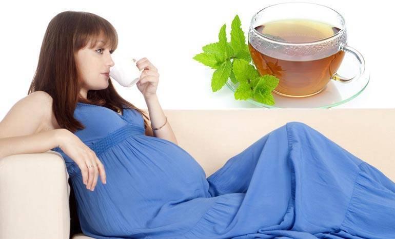 Особенности и секреты грамотного использования душицы при беременности