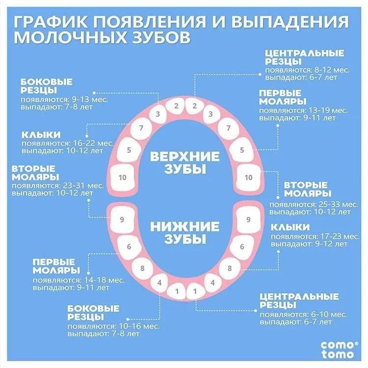 Выпадение зубов у детей—причины, порядок, возраст, типовые проблемы