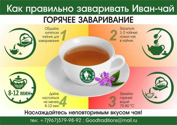 Иван чай - полезные свойства, как заваривать. как правильно собирать и сушить иван чай